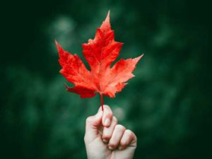 Holding a red leaf