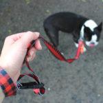 stunt puppy leash